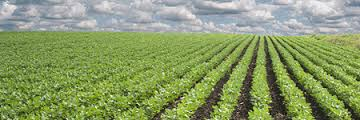 agriculturebusinessplan