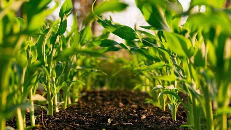 agriculture farm business plan