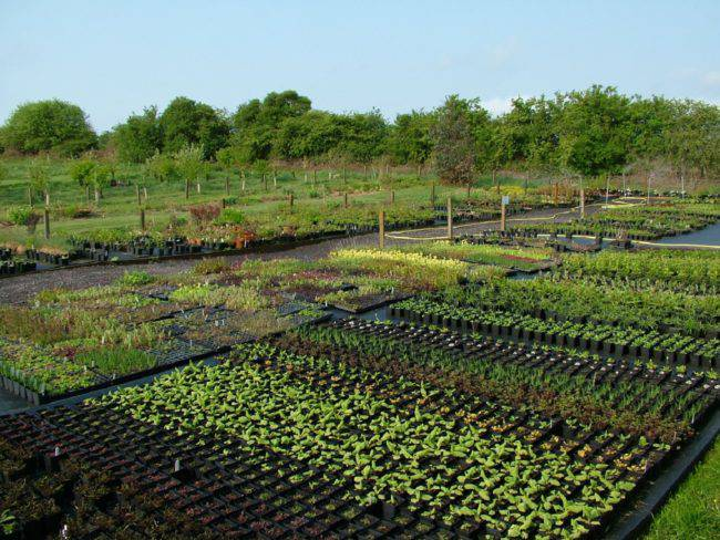 Garden Nursery Business Plan Example 2