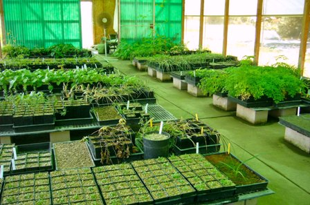 Plant nursery business plan