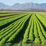 organic farm business plan sample