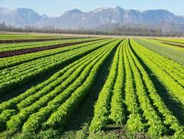 organic-farm-business-plan