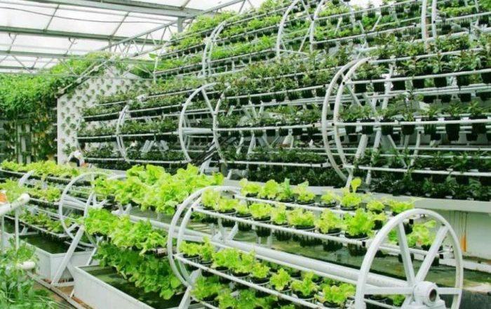Aquaponics Farm Business Plan Template