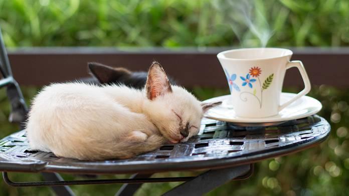 cat-cafe