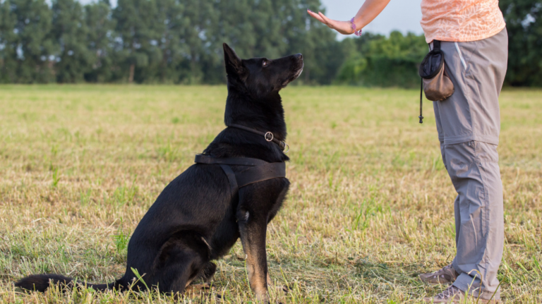 Dog Training Business Plan 1