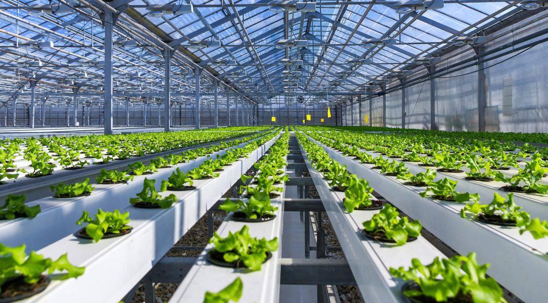 hydroponic farm start up cost