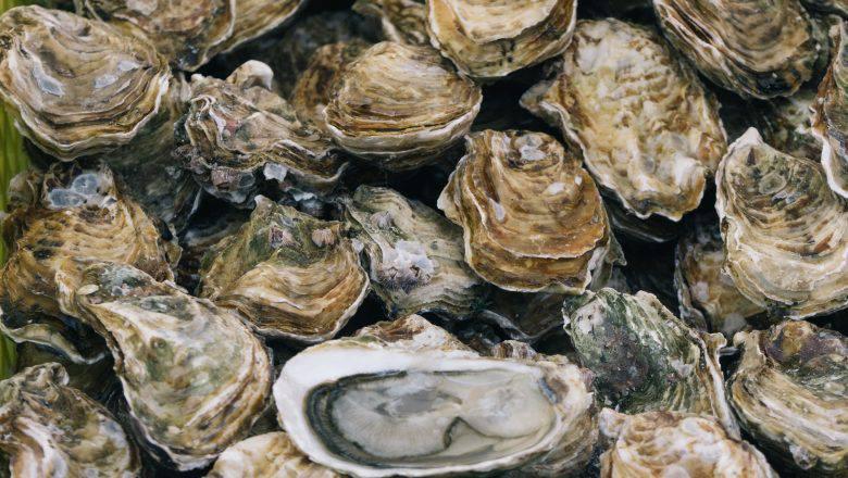 oyster farm business plan OGS